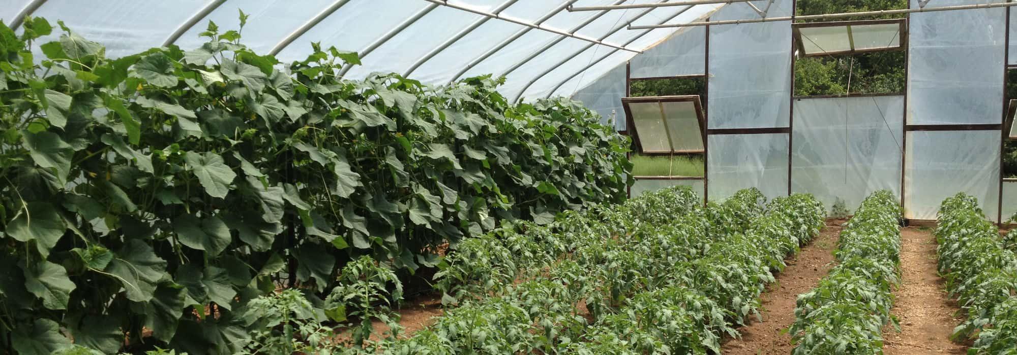 Homepage Slider Greenhouse